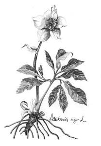 Kerstroos fig 3